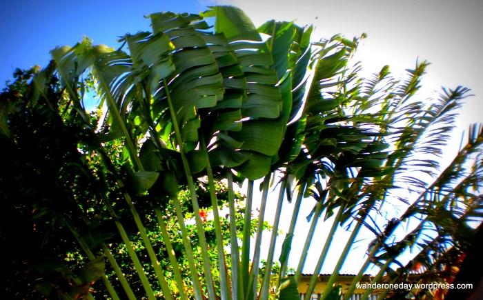 St. Kitts 028