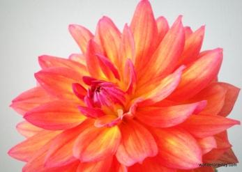 Camera practice - flower 015