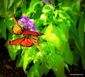 Hershey Botanical Gardens 054